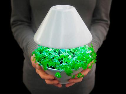 Развитие растений при светодиодном освещении